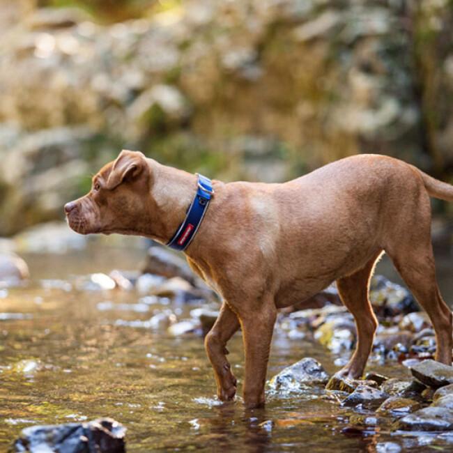 Collier Ezydog Néo-Classic pour chien