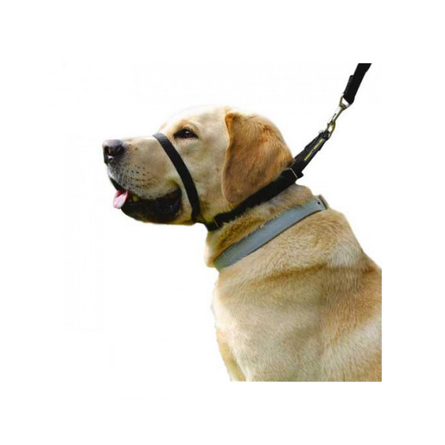 Collier licol Canny Collar pour chien