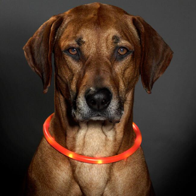Collier lumineux Visio Light à Led pour chien