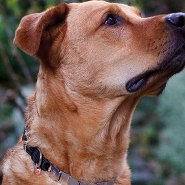 Collier Neck-Tech Fun Inox pour chien