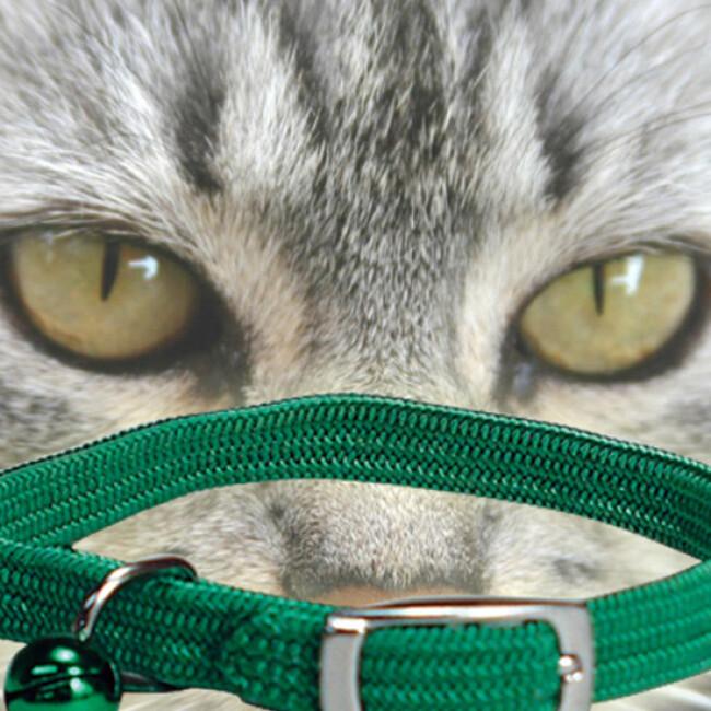 Collier nylon élastique pour chat