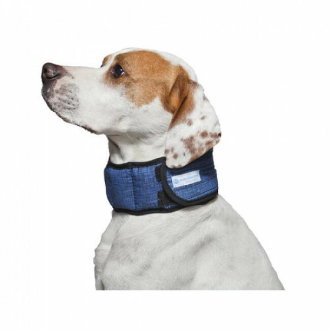 Collier rafraîchissant pour chien Aqua Coolkeeper