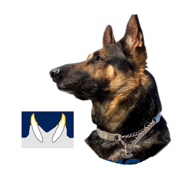 Collier semi étrangleur chien Neck Tech Sport Inox