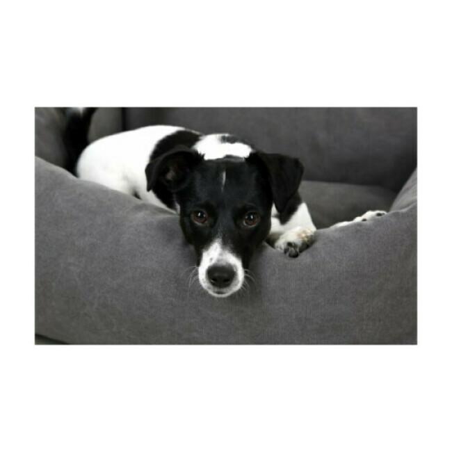 Corbeille Lucca pour chien