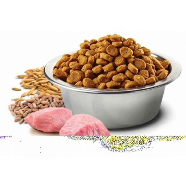Croquettes Farmina N&D Ancestral Grain Maxi et Medium Agneau Myrtille pour chien