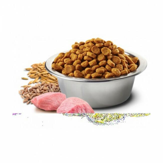 Croquettes Farmina N&D Ancestral Grain Agneau Myrtille pour chien de taille grande ou moyenne