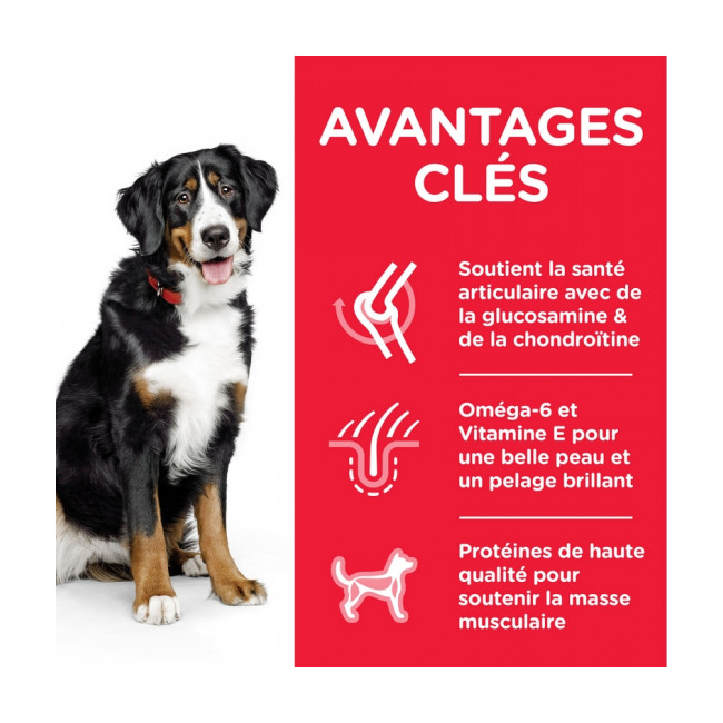 Croquettes Hill's Science Plan Canine Adult Large Breed Poulet