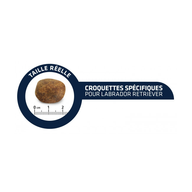 Croquettes Labrador Retriever adulte Advance Sac 12 kg