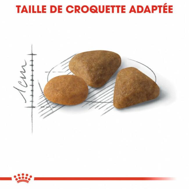 Croquettes chat Royal Canin Exigent Savour Sensation