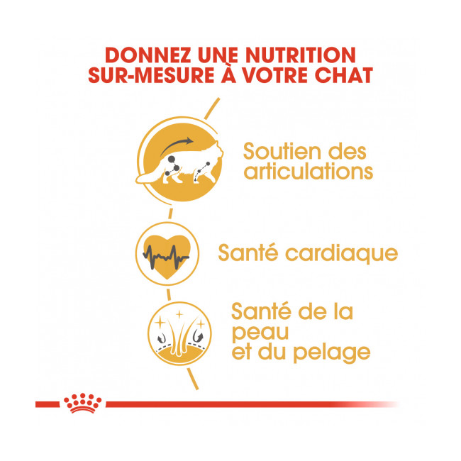 Croquettes pour chat Royal Canin Maine Coon