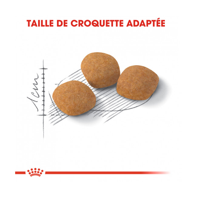 Croquettes pour chats Royal Canin Protein Exigent