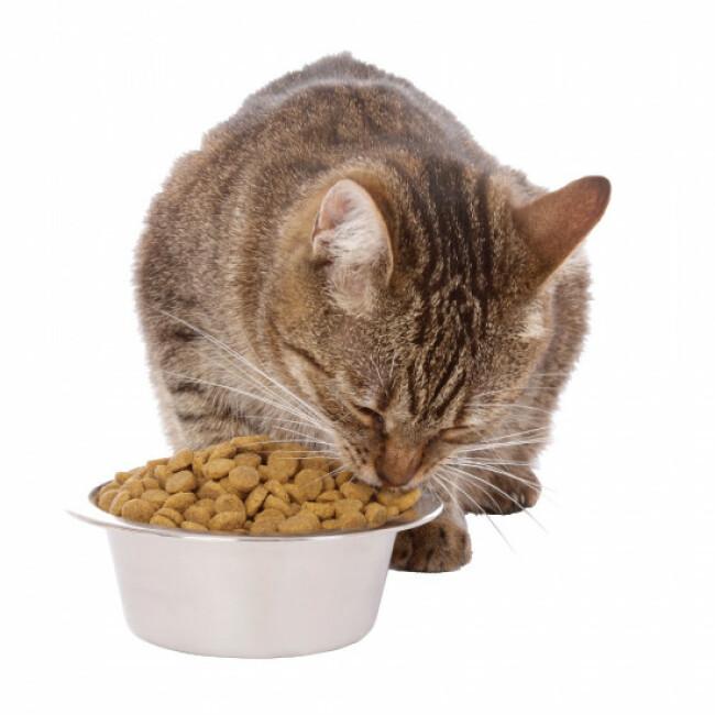 Croquettes pour chats stérilisés aux protéines d'insectes