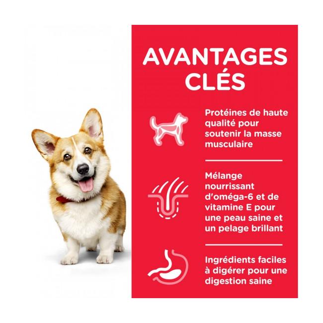 Croquettes pour chien adulte petites races Hill's Science Plan poulet