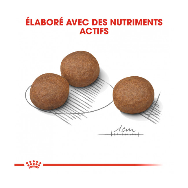 Croquettes pour chien adulte race moyenne Digestive Care Medium Royal Canin