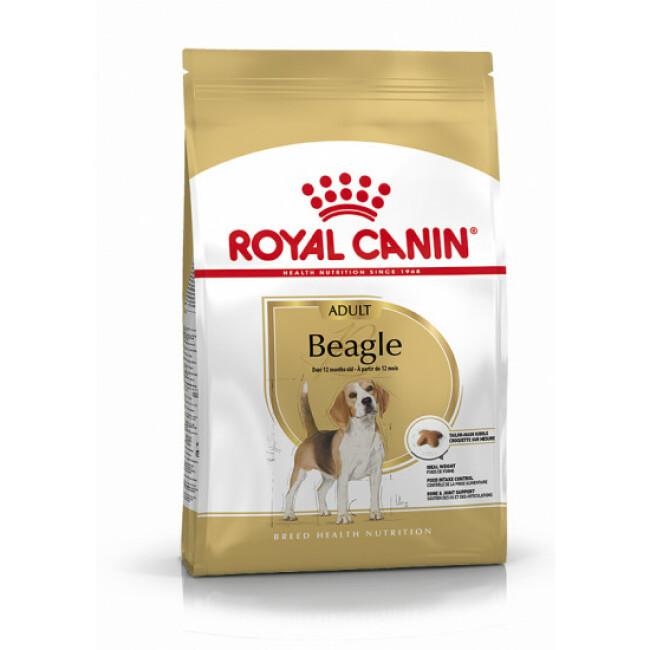 Croquettes pour chien adulte Royal Canin Beagle