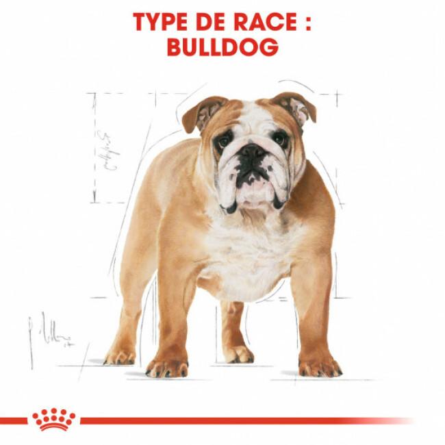 Croquettes pour chien adulte Royal Canin Bulldog Anglais