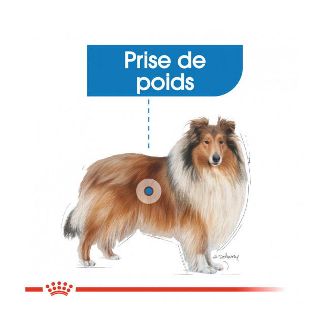 Croquettes pour chien adulte grande race Light Royal Canin