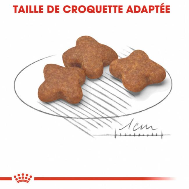 Croquettes pour chien adulte Royal Canin petite race 8+
