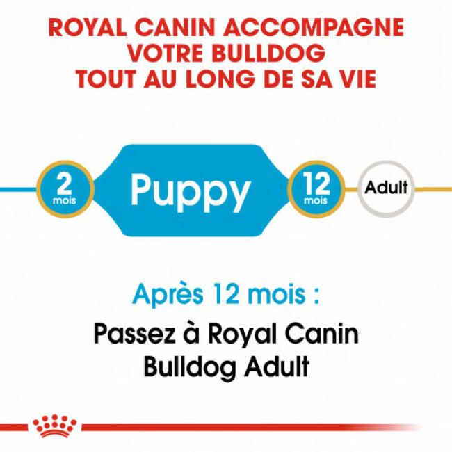 Croquettes pour chien junior Bulldog Anglais Royal Canin Puppy