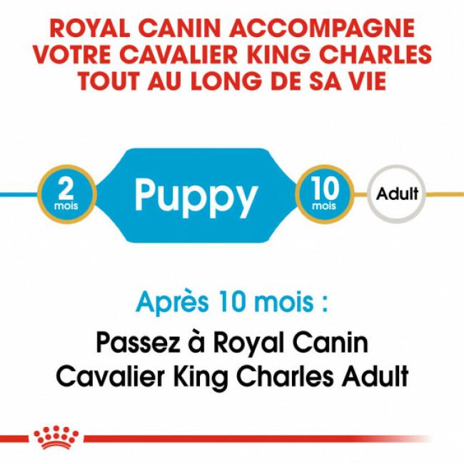 Croquettes pour chien junior Royal Canin Cavalier King Charles Sac 1,5 kg