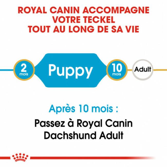 Croquettes pour chien Teckel Royal Canin Breed Nutrition junior Sac 1,5 kg