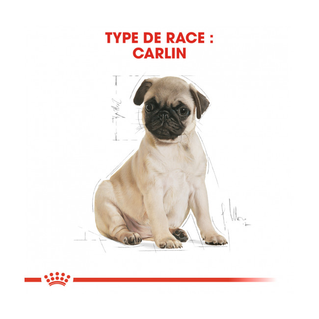Croquettes pour chiot Royal Canin Carlin Breed Pug Junior sac 1,5 kg
