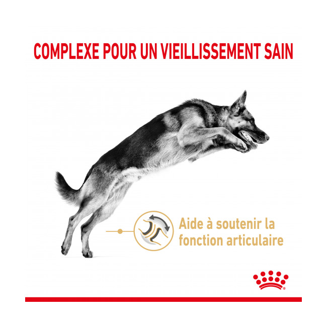 Croquettes Royal Canin Berger Allemand Adulte 5+