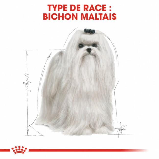 Croquettes Royal Canin Bichon Maltais 24 Adulte