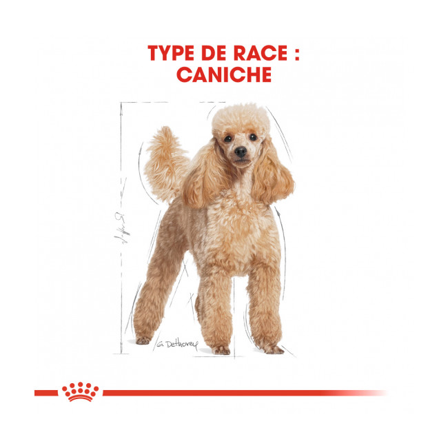 Croquettes Royal Canin Caniche 30 Adulte