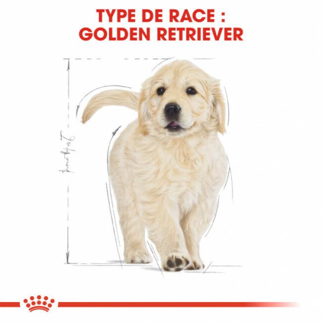 Croquettes Royal Canin Golden Retriever Puppy