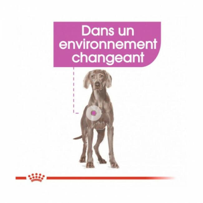 Croquettes Royal Canin pour chien de grande race Maxi Relax Care