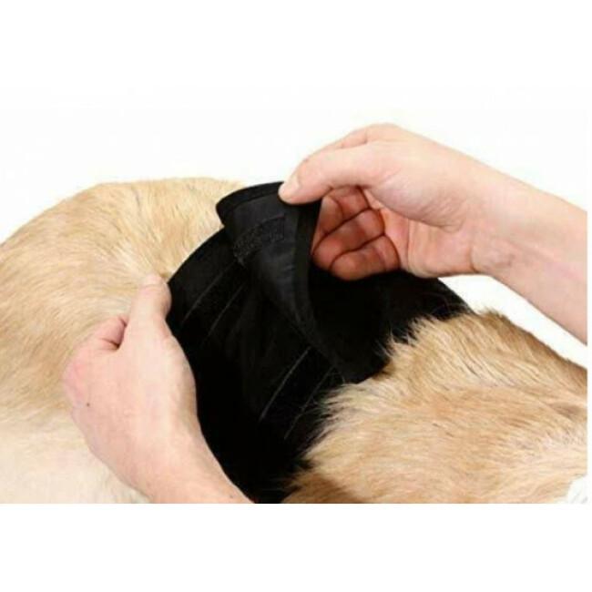 Culotte d'incontinence et fuite urinaire pour chien mâle