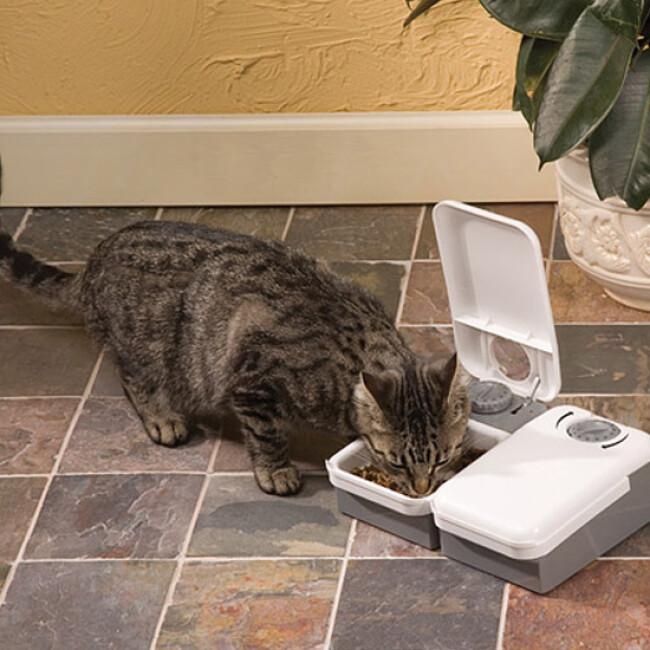 Distributeur automatique de nourriture pour petit chien et chat