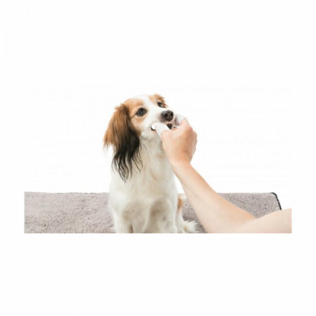 Doigtiers soin des dents à usage unique pour chien et chat Trixie