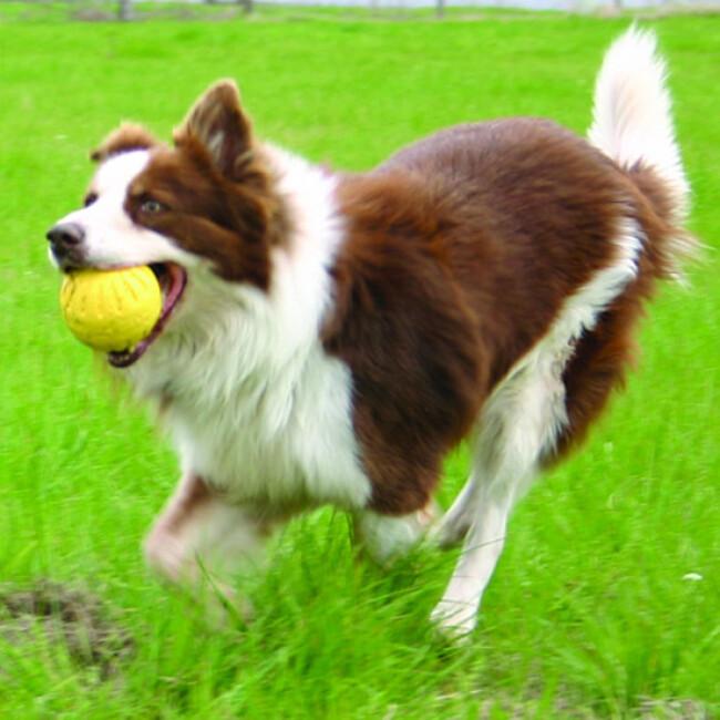 Fantastic Foam Ball pour chien
