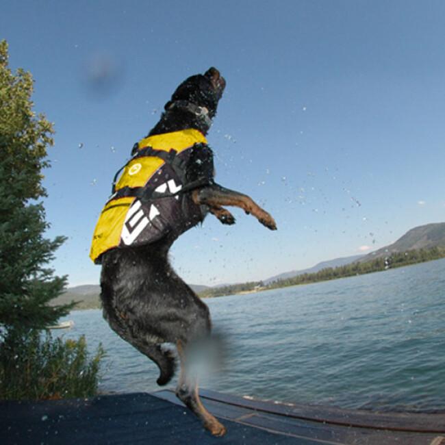 Gilet de sauvetage Ezydog DFD pour chien