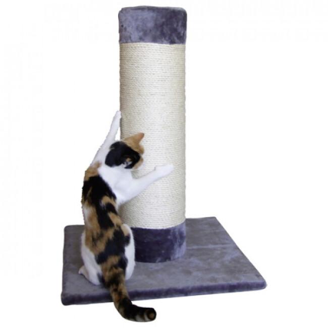 Griffoir Hercule pour chat
