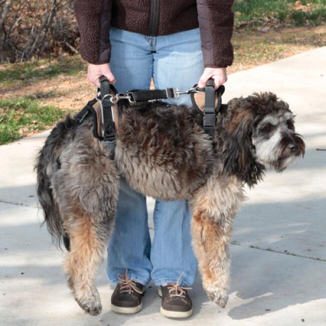 Harnais AidDog™ pour aide à la mobilité du chien âgé et handicapé