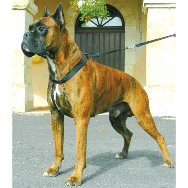 Harnais pour empêcher le chien de tirer Sympa Dog