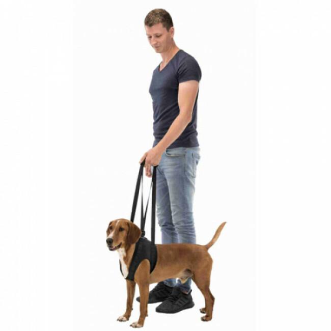 Harnais d'aide à la marche pour chien