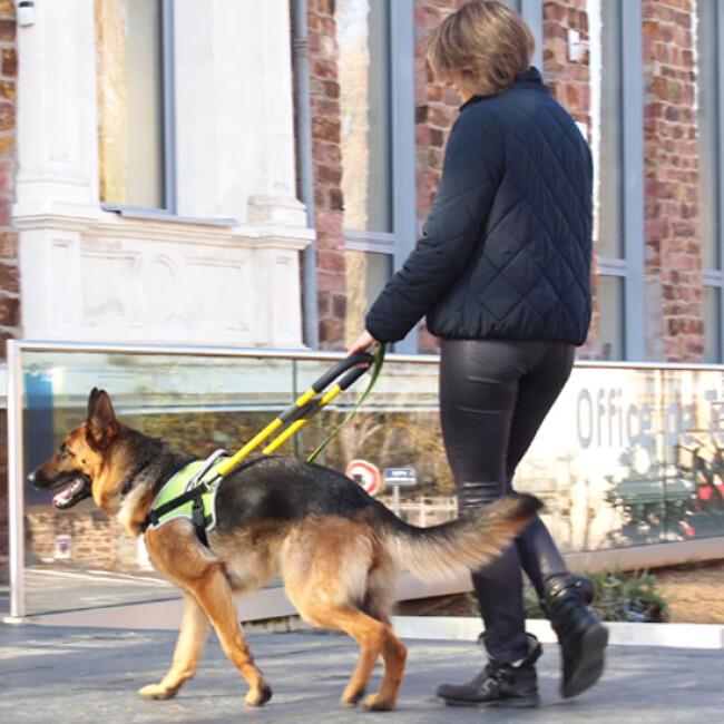 Harnais DoGuide pour chien d'aveugle malvoyant et d'assistance