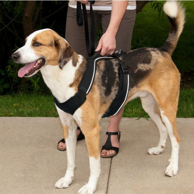Harnais EasySport Petsafe noir pour chien