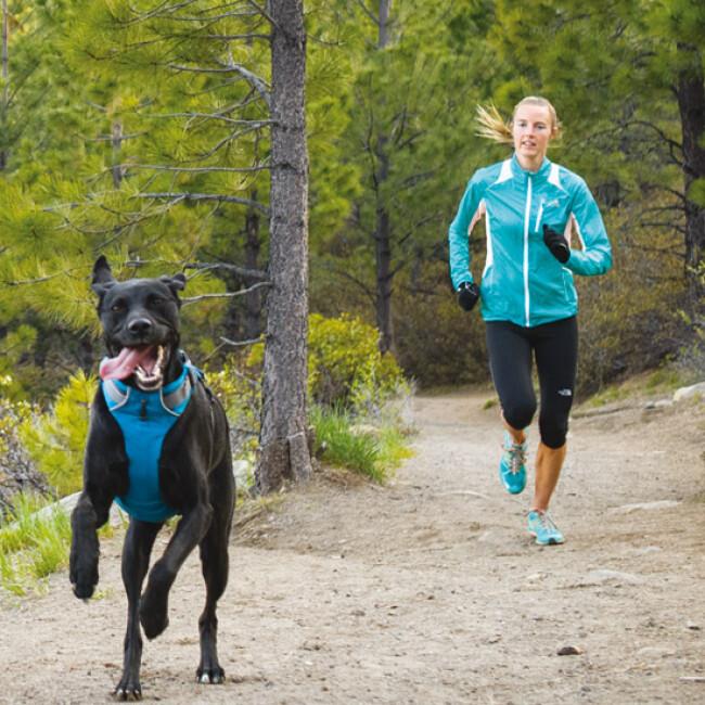 Harnais Ruffwear Front Range de sport et promenade pour chien