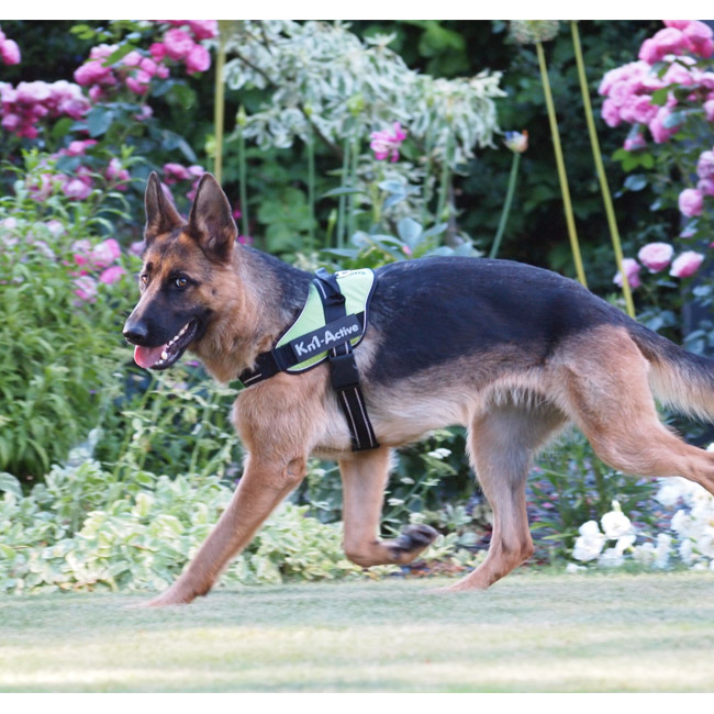 Harnais Kn'1 Active Speed pour chien sportif