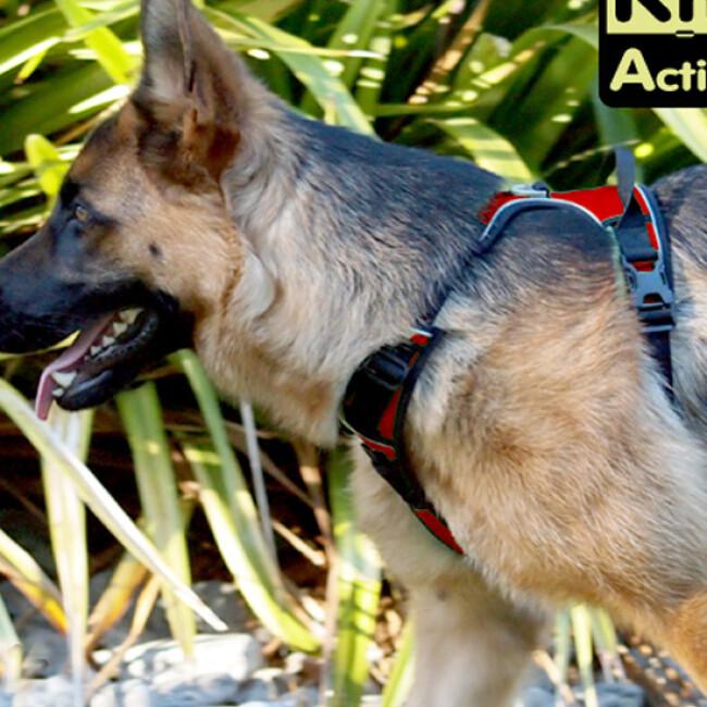 Harnais multifonction Kn'1 Active Drive pour chien