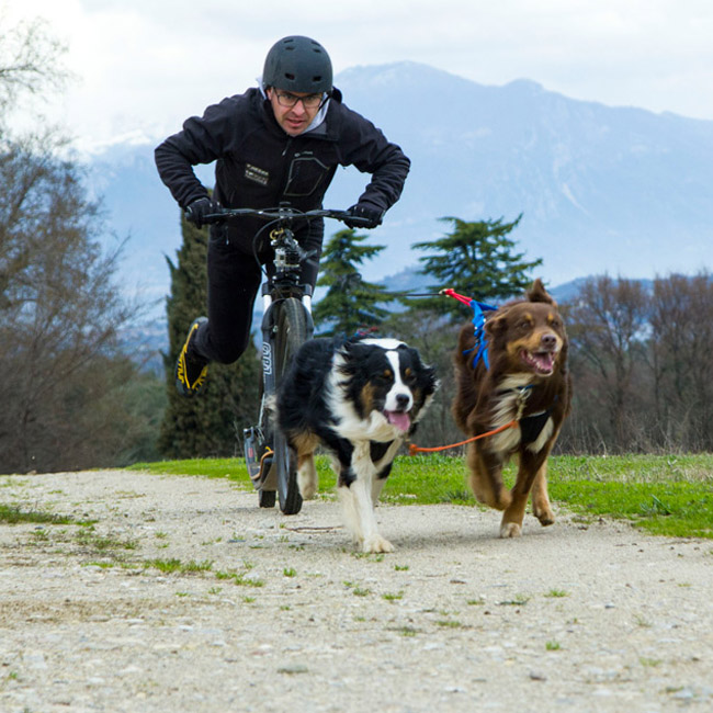 Harnais Neewa Racing H-Back pour sport de trait avec chien
