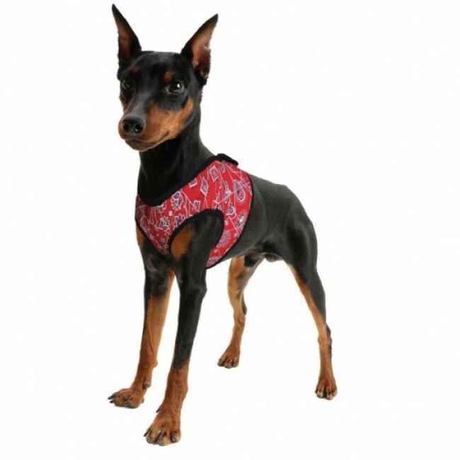 Harnais rafraîchissant rouge pour chien Aqua Coolkeeper