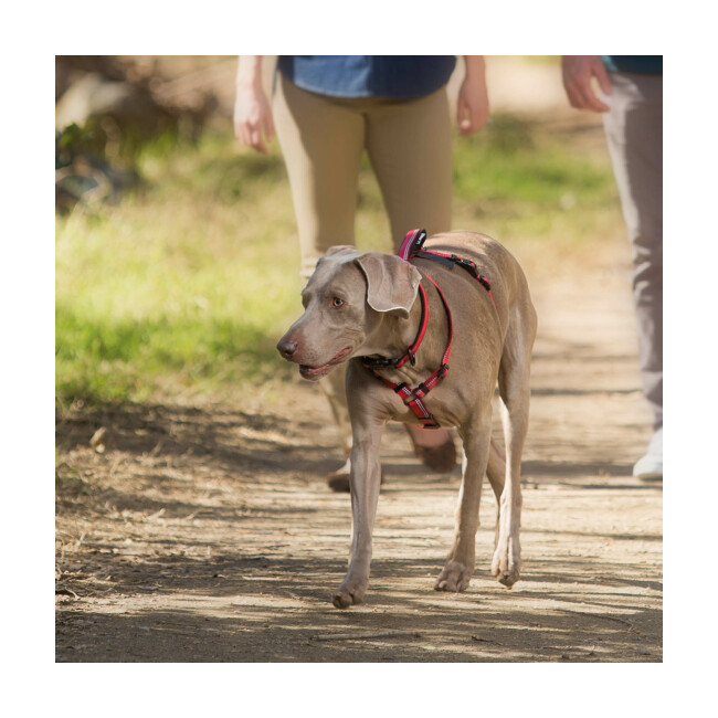 Harnais Walking Halti pour chien