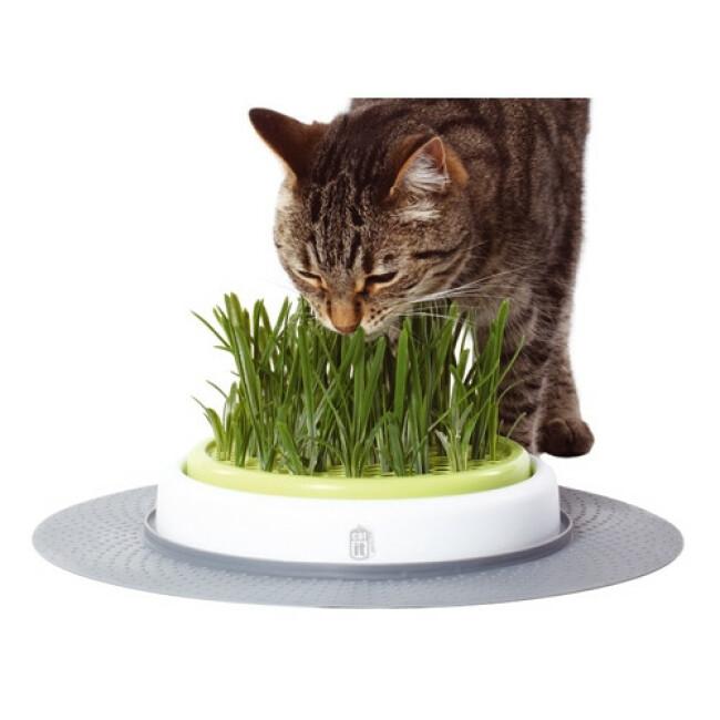 Jardin d'herbe pour chat Senses Design Cat'It