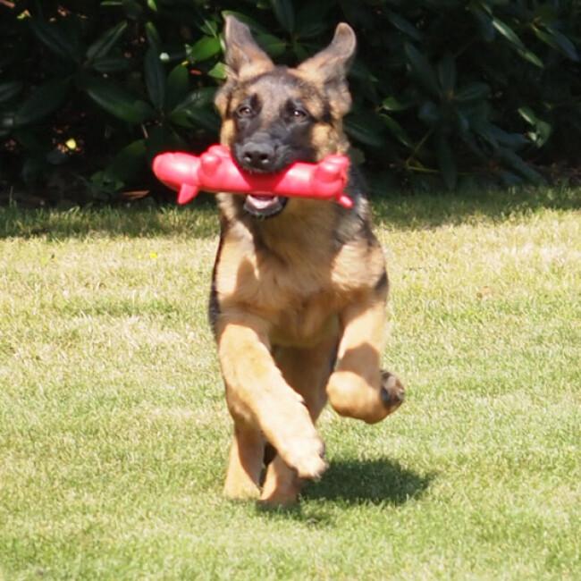 Jeu JW Megalast long dog sonore pour chien